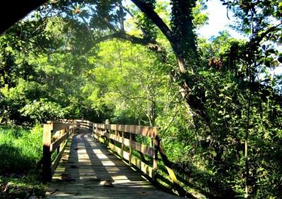 Forêt Vatable des Trois-Îlets
