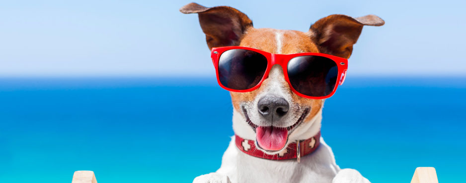 Quelles sont les formalités pour voyager avec un chien